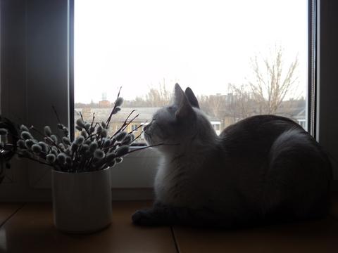 Моя Мышка и веточки вербы