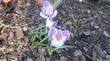 веснааа