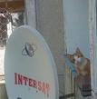 Кот  соседа мастер по антеннам :)