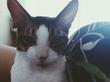 у меня есть и кот, и лясопед :)