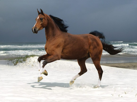 Самая красивая фотография лошади на вас вкус?