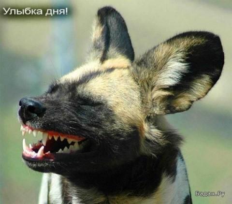 Как улыбаются животные? Не рисованные, а живые!
