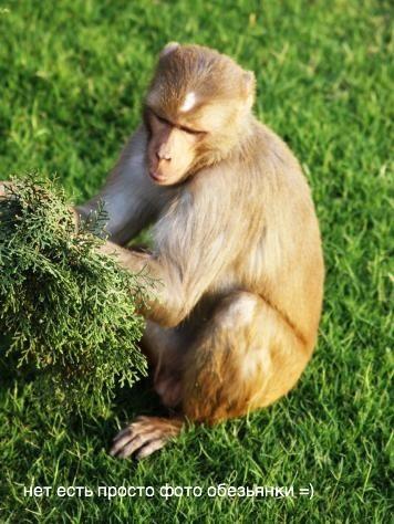 У вас тоже есть фото с обезьянкой?