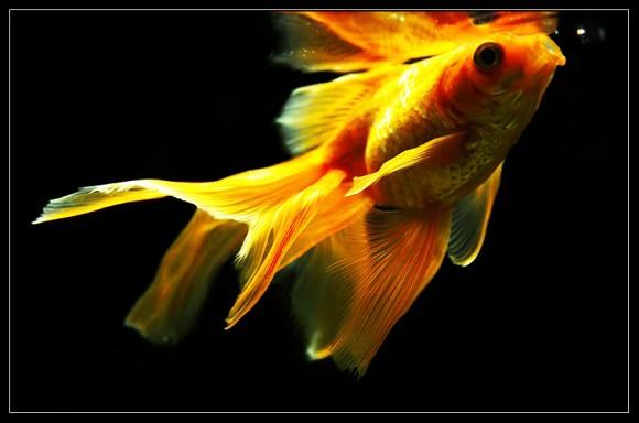 Какая ваша самая любимая рыбка?? )))