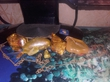 Эксклюзив-украшения из янторя