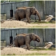 Слоня кушает