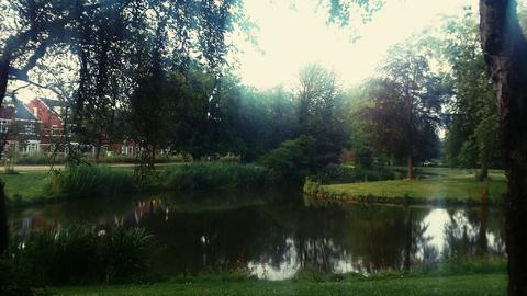 Чистые пруды, застенчивые ивы