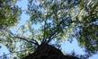 Дерево, которое посадил Джек.