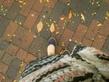 У людей проходящих мимо отлетают желтые листья.