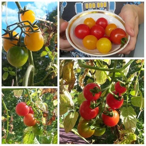 Балконный урожай