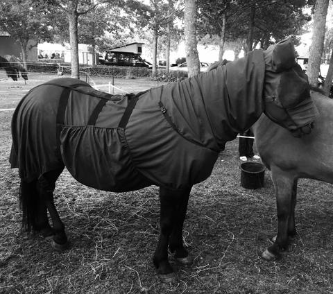 лошадь-мусульманка