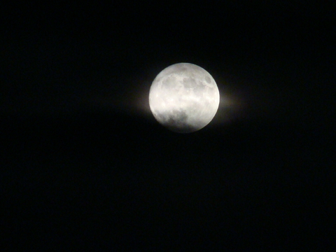 Луна-луна, цветы-цветы...