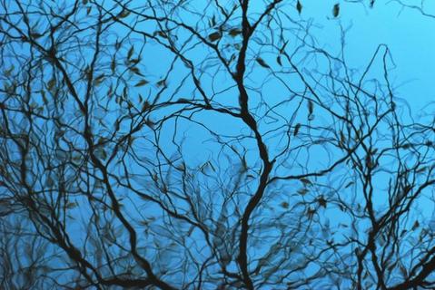 Плывущие деревья.
