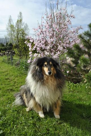 Покажите самую красивую породу собак?