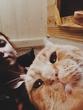 Самый фотогеничный кот 2016:D