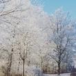 Зима крч