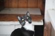 Викинг - Самый мечтательный кот 2016