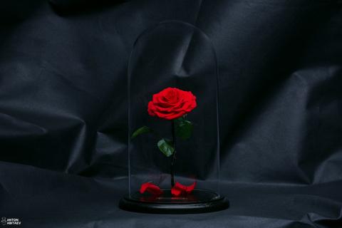 Наша новая роза =)