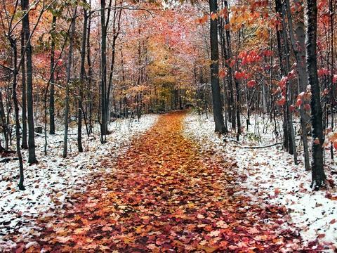 С чем у Вас ассоциируется ноябрь?