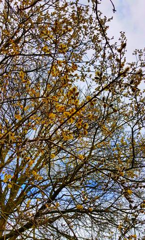 The sorrow tree...