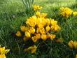 всем весны и любви, и тепла.