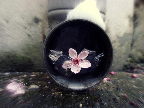 Цветок и лёд, или немного серости - в наши яркие будни.