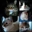 Мои девчонки: Анфиса, Мышка, Лёля, Маня и Мара