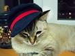 Моя Мышулька в шляпке
