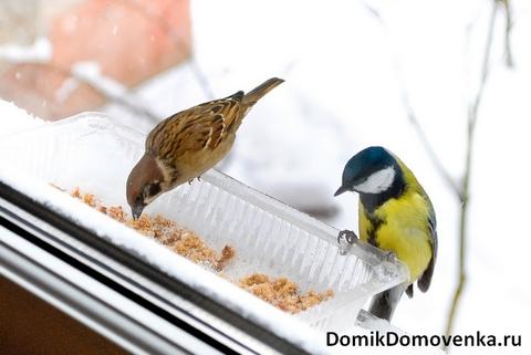 Какие птицы летают в вашем небе?