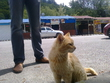 дивноморский местный кот