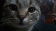 васятко.   осознанный кот