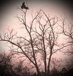 Ворона (готика)