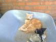 кот тряпошный