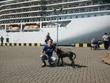 Кто был в Клайпеде - понимают, почему в порту ждет собака