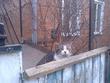 кот боярский выглядывает