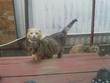 Опять эта Андрюхина наглая кошка приперлась