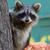 В чем разница между блинами, панкейками и оладьями? — Zira.uz