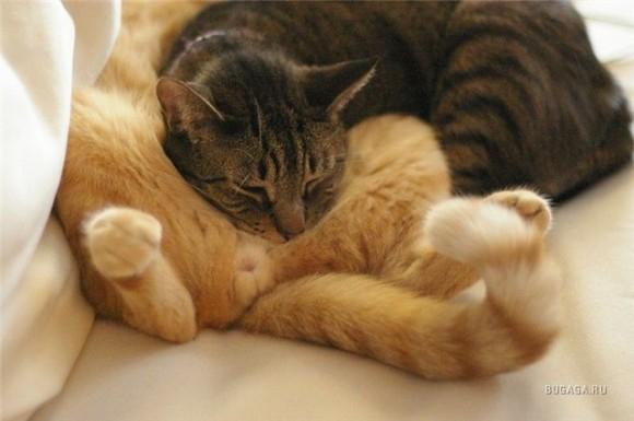 пожелай всем спокойной ночи ?