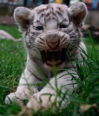 -dzīvnieks-radība kura gribētu būt nākošajā reinkarnācijā!-ja tas būtutavā izvēlē!;)