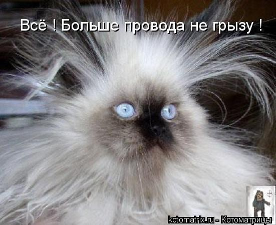 А как выгледит ешкин кот?