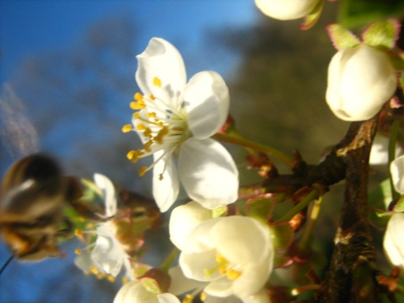 А когда яблони цветут,что вам больше всего нравится и без чего не можется?