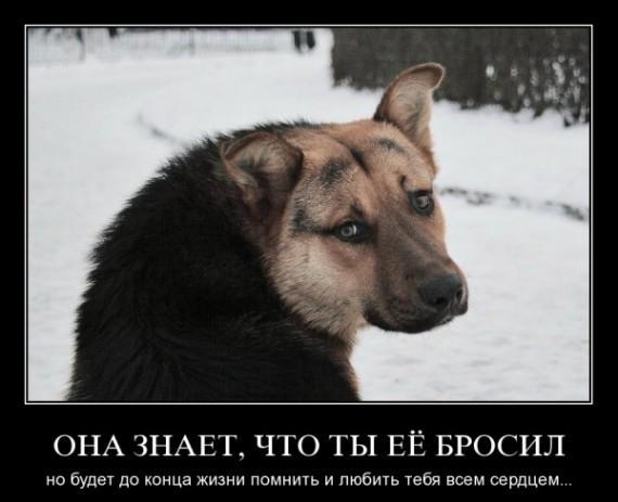 демотиватор собак