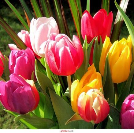 красивые фото цветов: