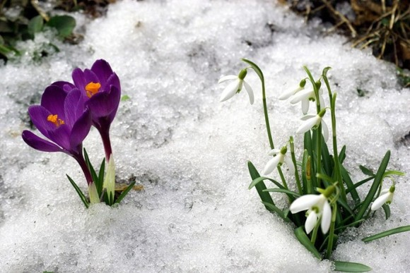 Какие они - первые шаги весны?
