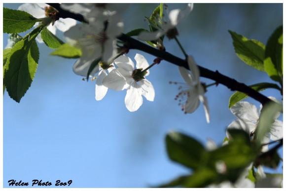 Красивые летнее фото, сделаные вами, покажите?