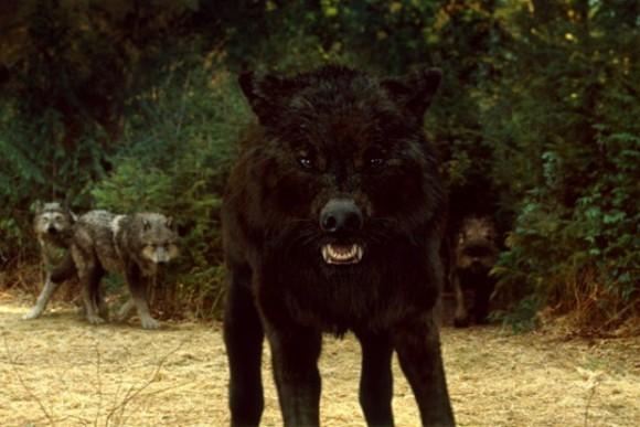 Если бы у вас была такая возможность превратиться в любого животного , в кого бы вы превратились?