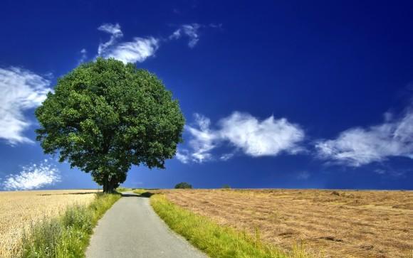 Покажите дерево ?