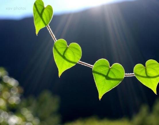 покажите красивое сердечко?