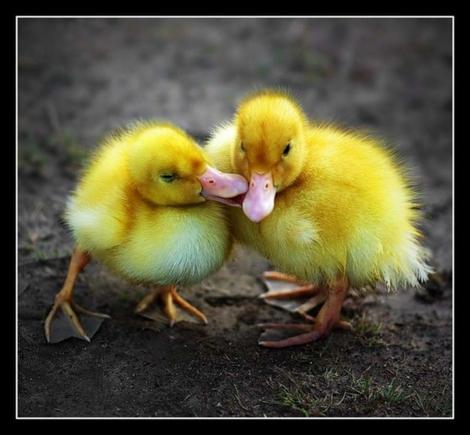 покажите   милого птенчика=)