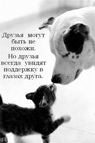 Покажите что-нибудь милое?)